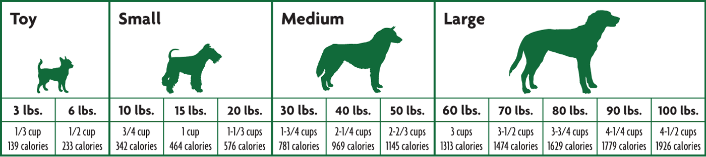 Feeding Guide for Dogs