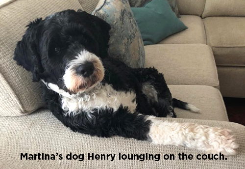 Martina's dog Henry lounging on the couch.